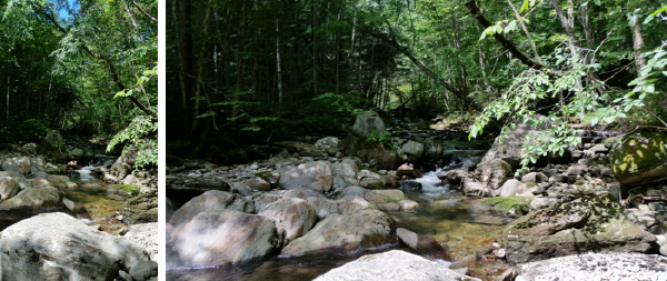 Stevenson Brook Trail - Hike Stowe Vermont
