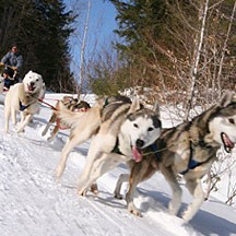 Vermont Sled Dog tours
