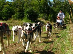 Vermont Summer Dog Sledding