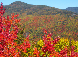 Stowe Fall Foliage