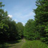 Trail Running in Stowe, Vermont